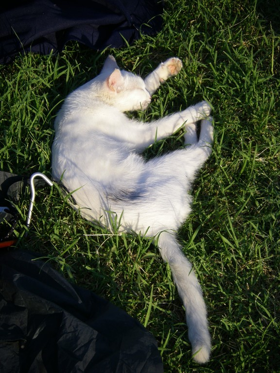 Le chat du camping.