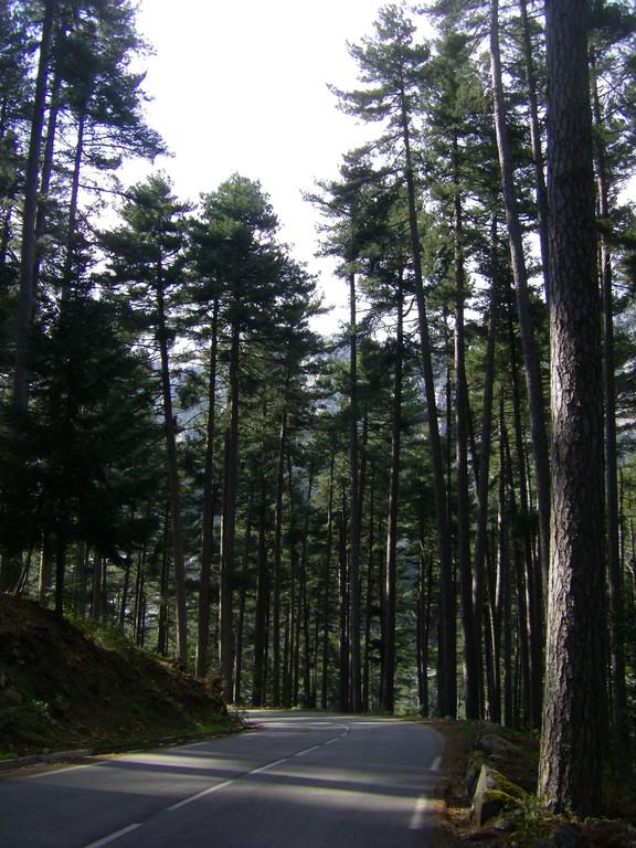 La forêt d'Aïtone.