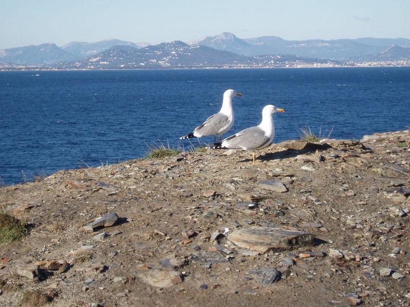 Deux des nombreux habitants de l'île.