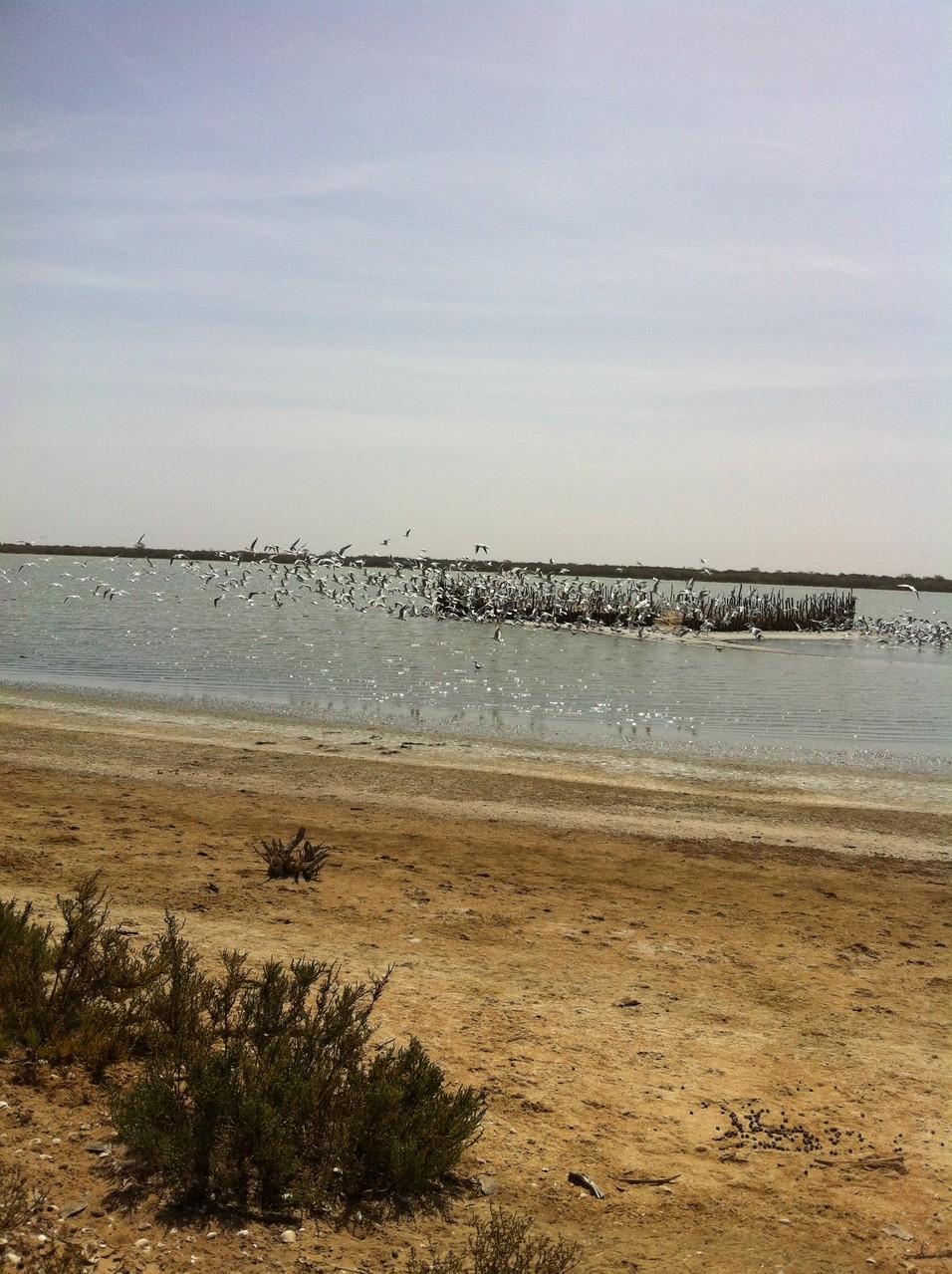 la plage de nianing