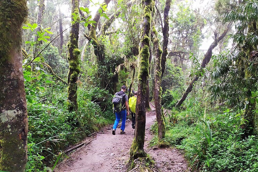 Way Down To Mweka Camp - Kilimanjaro Company