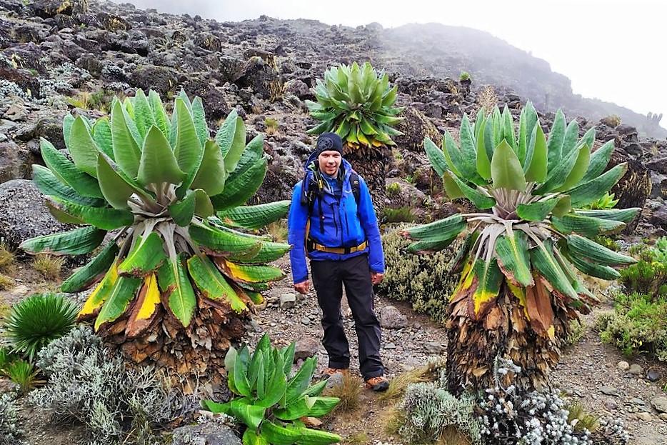 From Lava Tower Down To Baranco Camp - Kilimanjaro Company