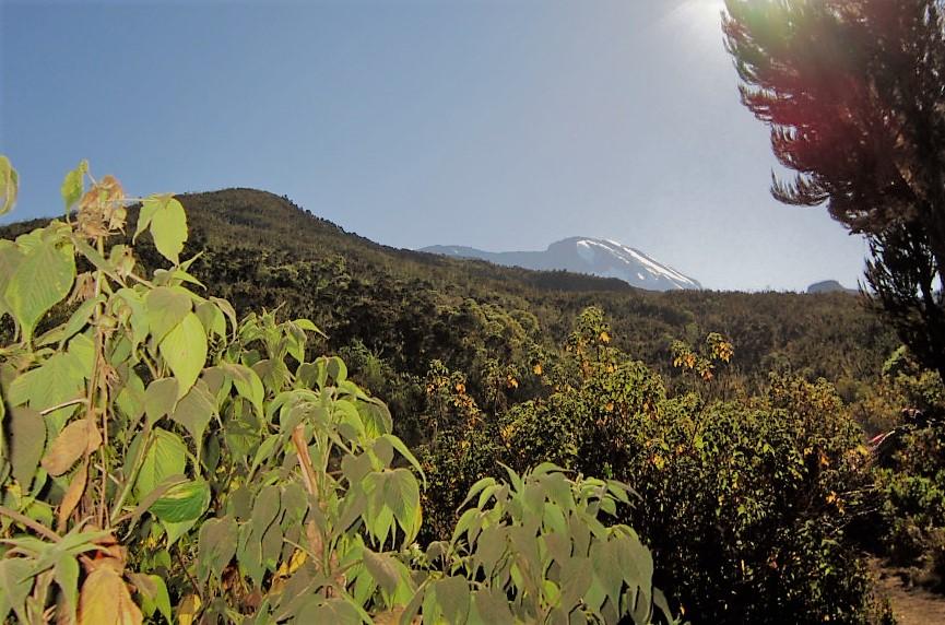 Best Kilimanjaro Operator
