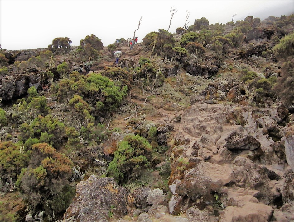 Ecosystems on Mount Kilimanjaro
