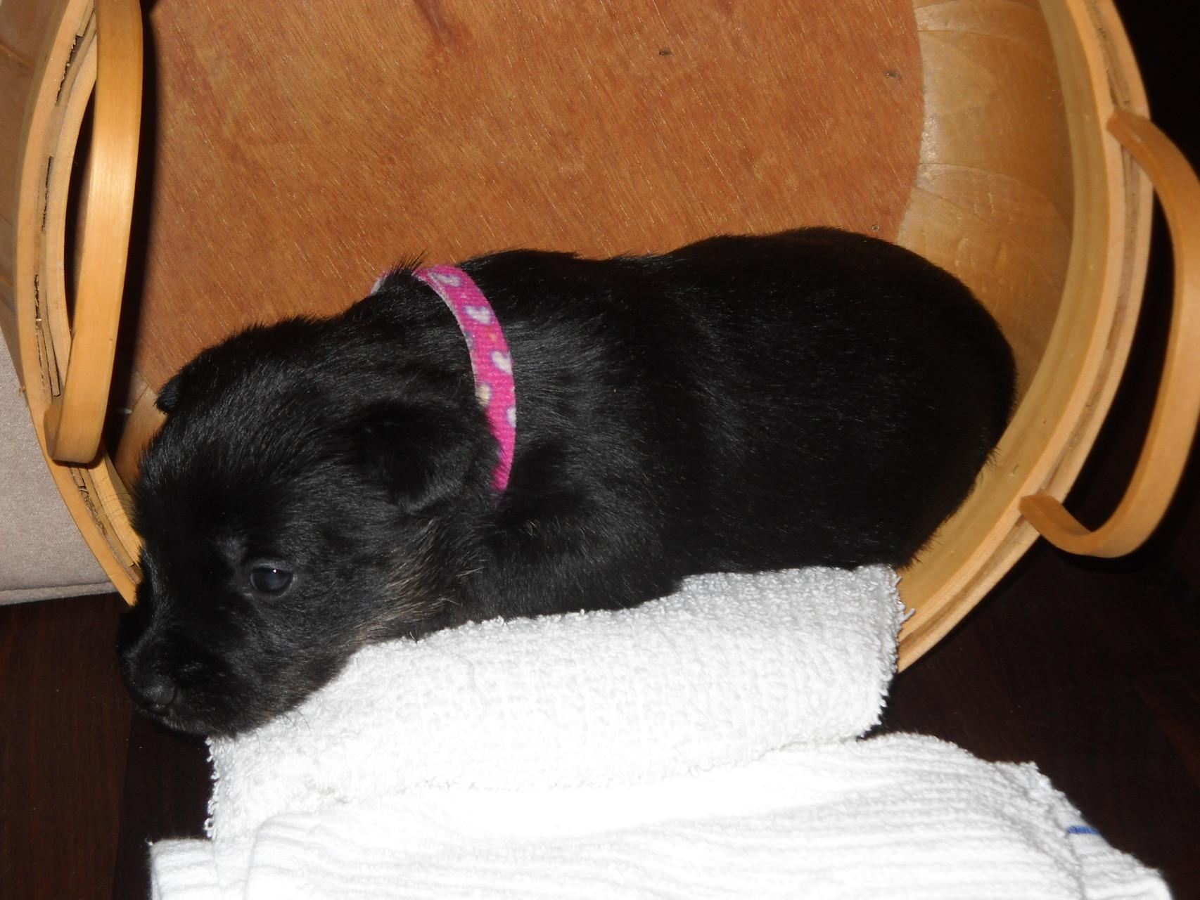 Little Abigale (Abby)