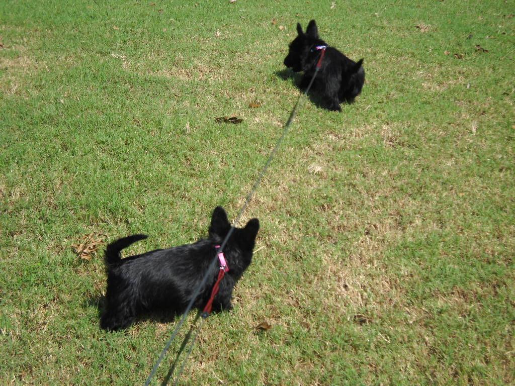 Sara and Sadie as Puppies