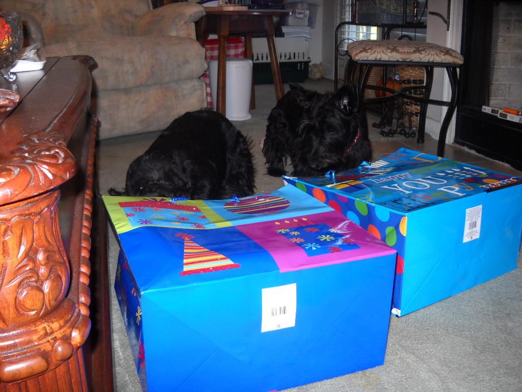 Sara and Sadie's 1st Birthday