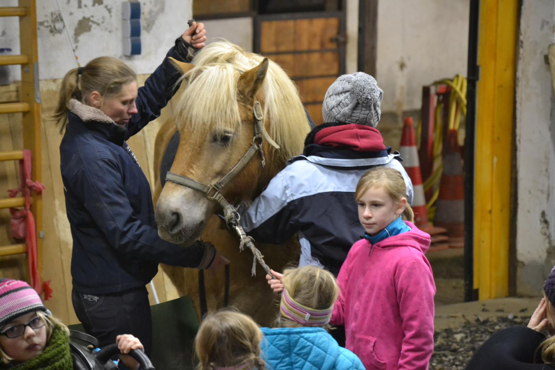 Mensch und Pferd sind ein Team