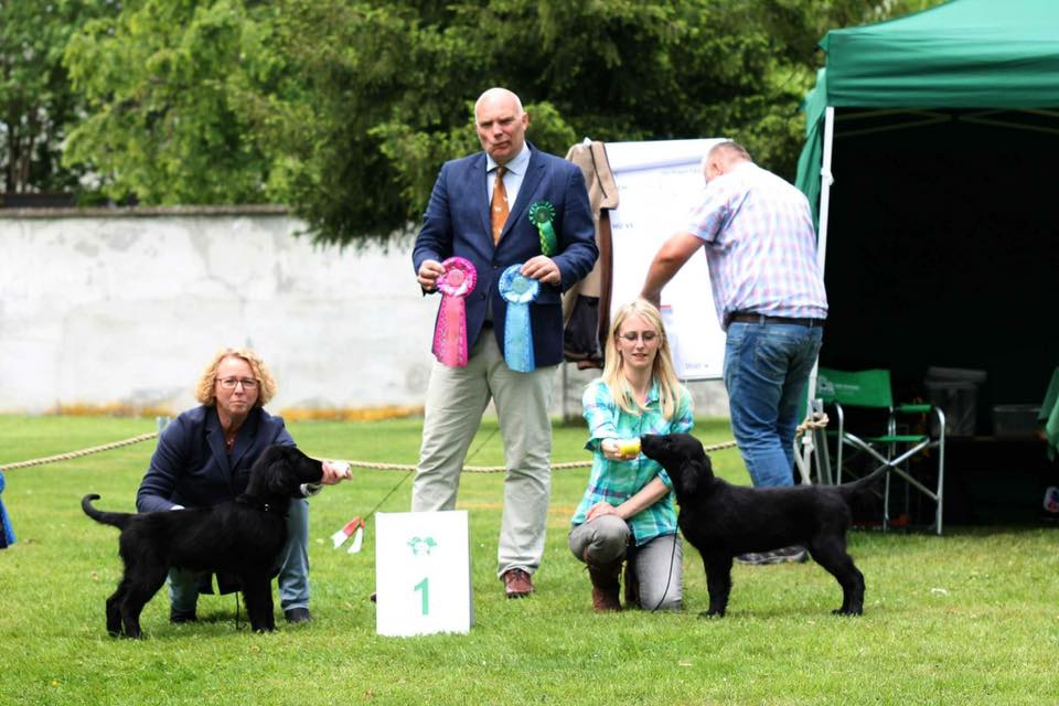 Flataholics Celtic Prince & F. Cute As Mum - both won puppyclass at their first Show