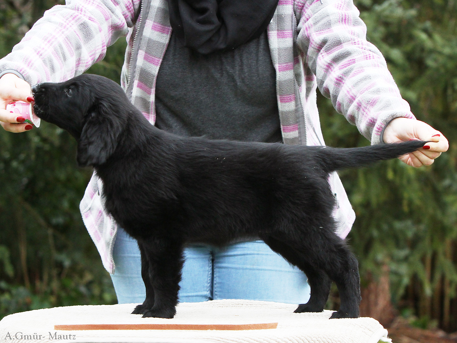 Mrs. Brown 8 weeks (Miles x Chayenne Black Velvet of Blackberry Forest)