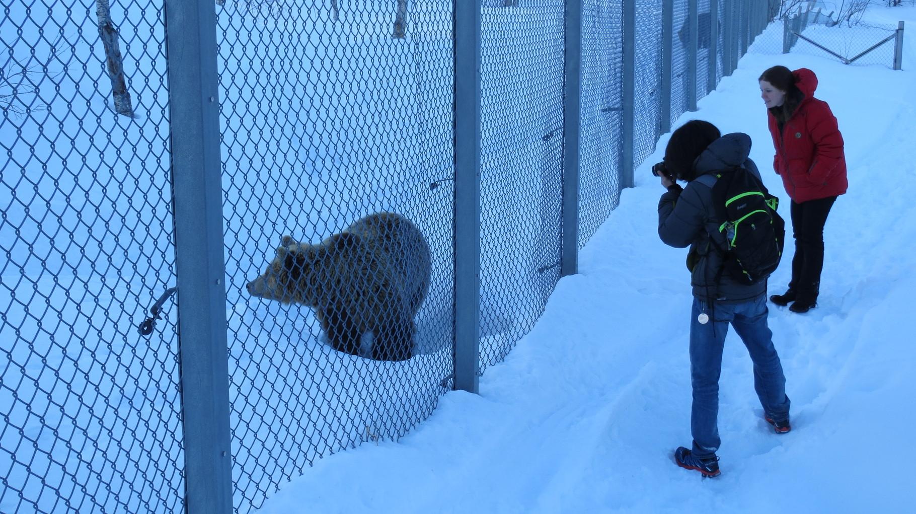 Die besten Entertainer waren allerdings die Braunbären:
