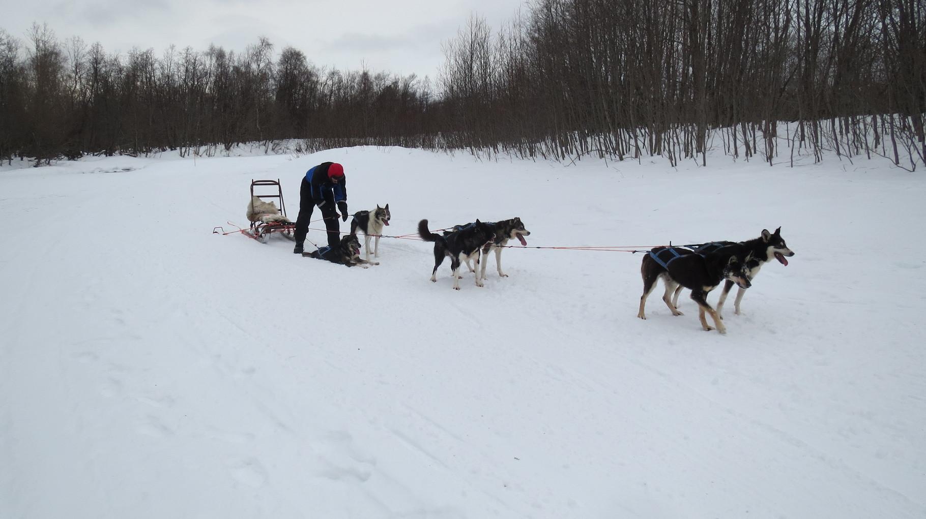 ... mit einigen Zwischenstopps zum Leinen- und Hundesortieren ...