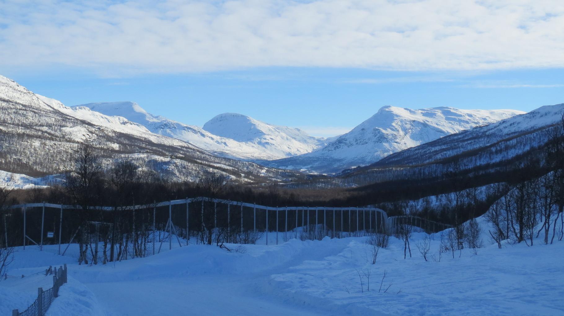 Hier finden sich mit viel Auslauf und den richtigen Temperaturen Prachtexemplare der nordischen Tierarten: