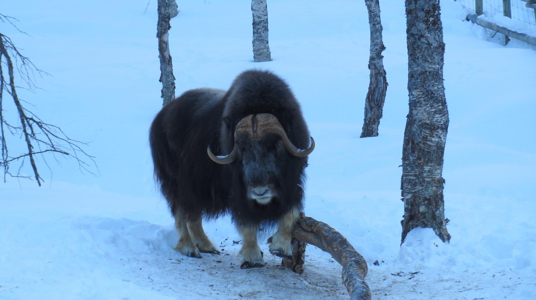 ... und dann jedes Bein einzeln von allen Seiten. Frühjahrsputz im Polar Park!