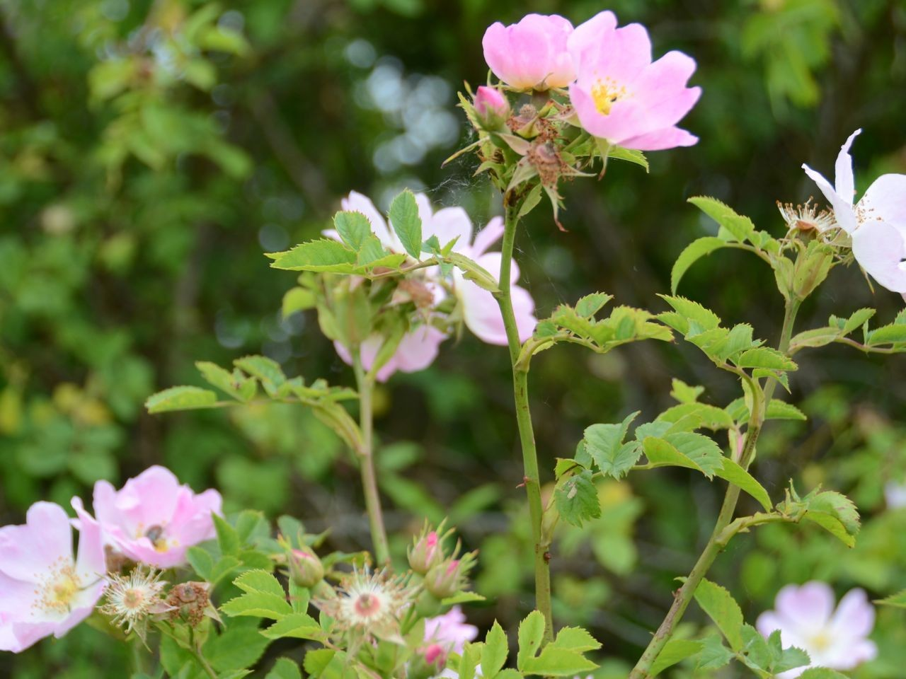 Insel Vilm Blumen
