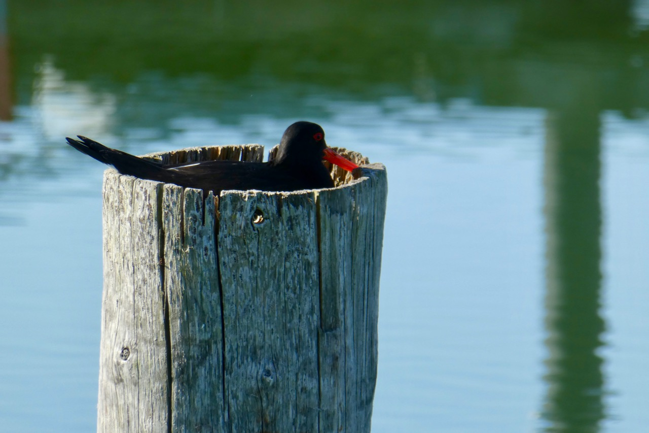 Kastelholm Vogel auf Pfahl