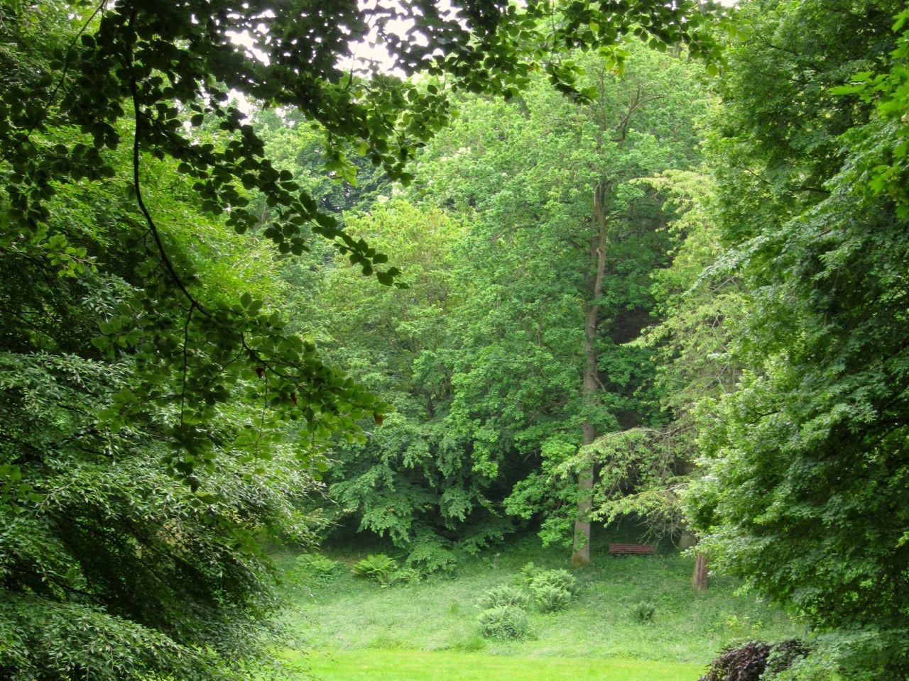 Ralswiek im Wald