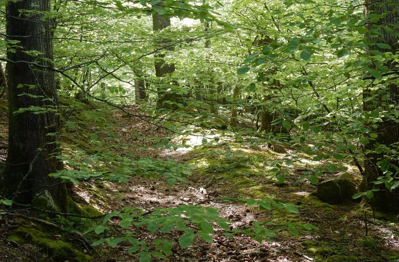 Bornholm tief im Wald