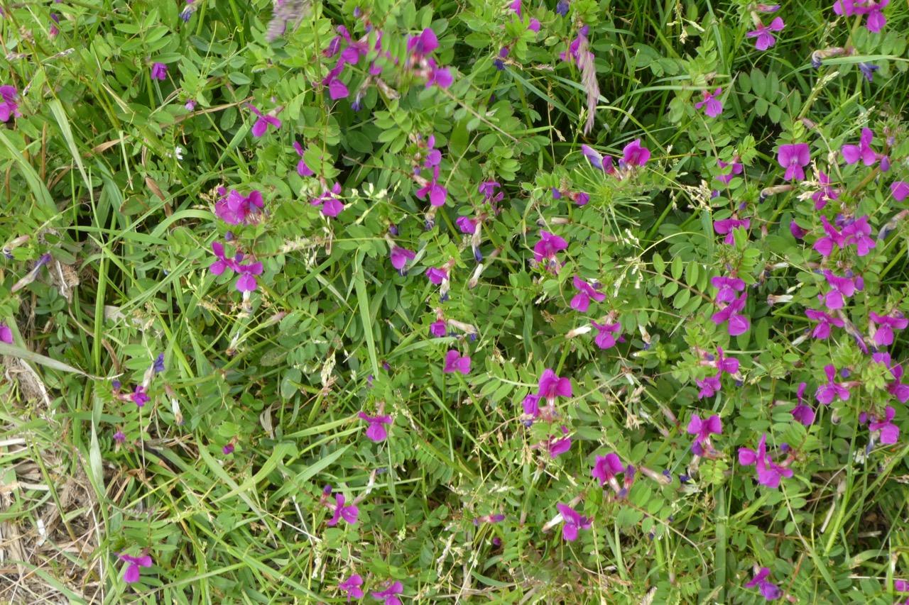 Kleiner Zicker Blumen