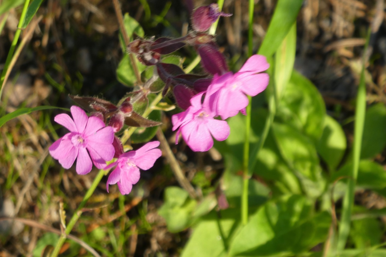 Pite Rönnskär Blumen