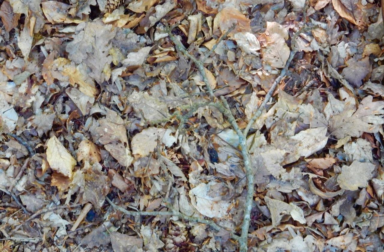 Der Herbst liegt im Frühling