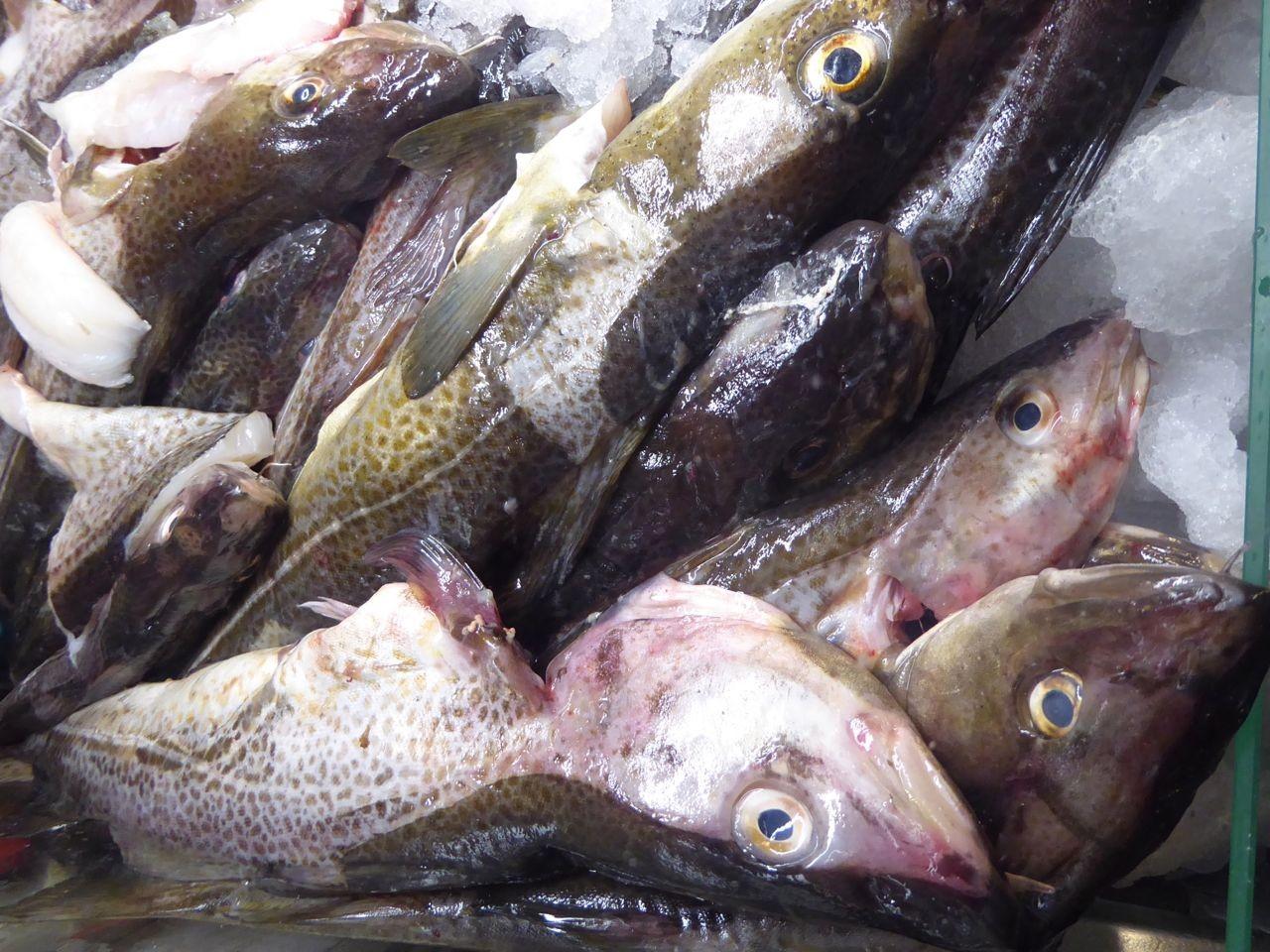 Kappeln Fischauslage
