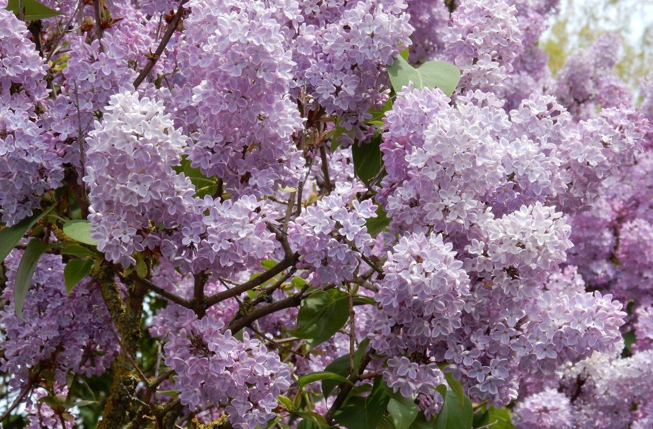 Simrishamn Blumen