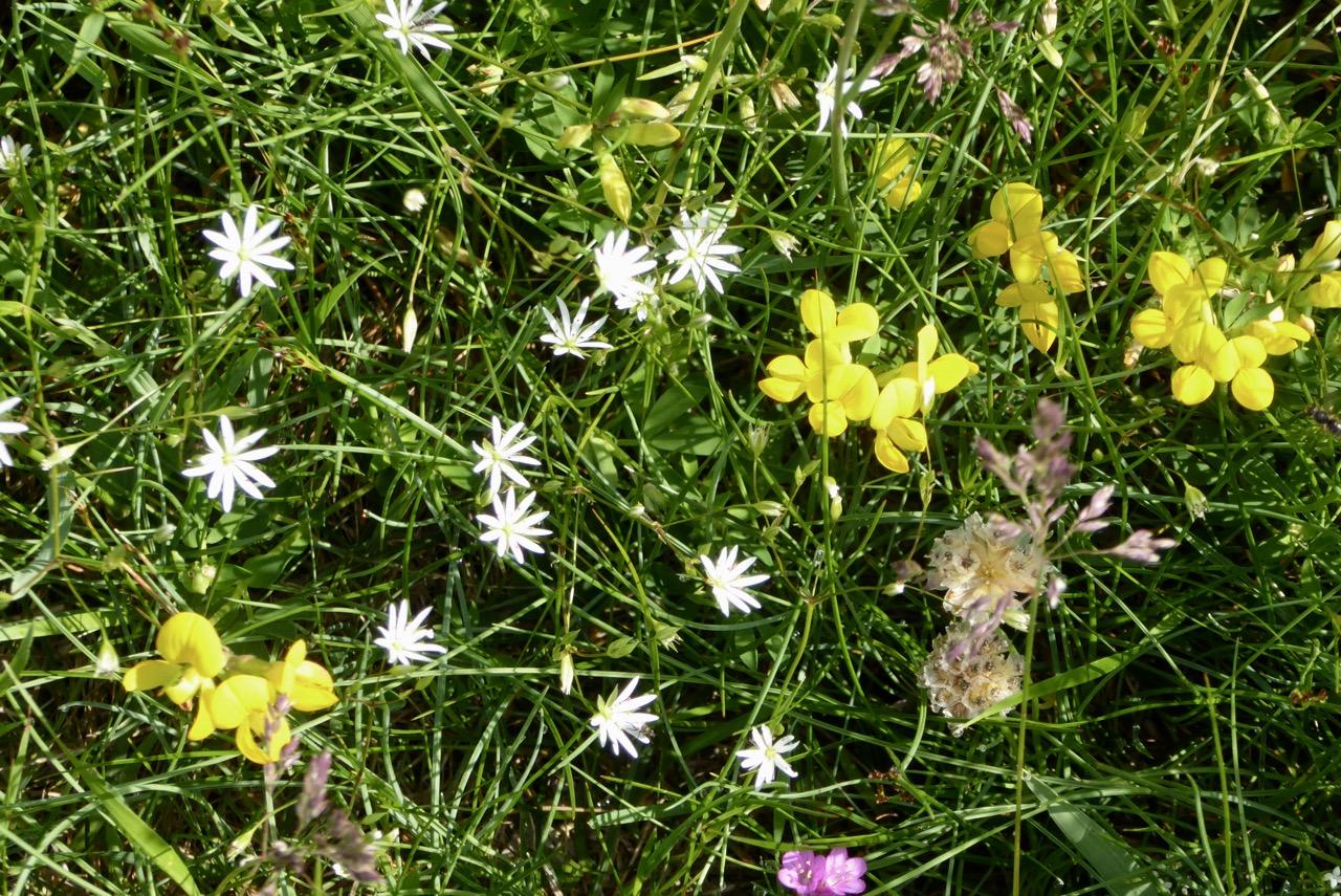 Kälvön Bucht Blumen