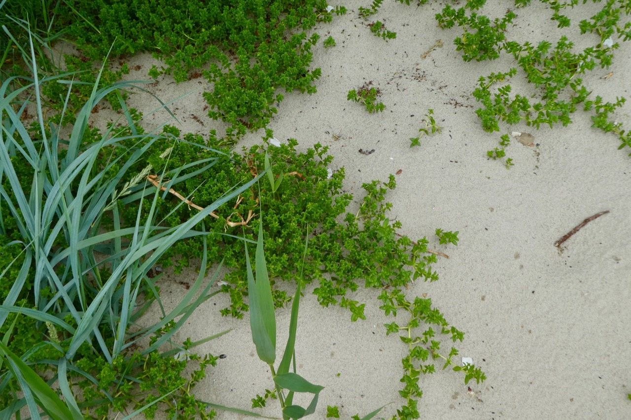 Tiessow Südperd Sand