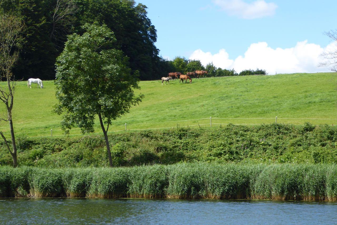 Haderslevfjord Landschaft Pferde