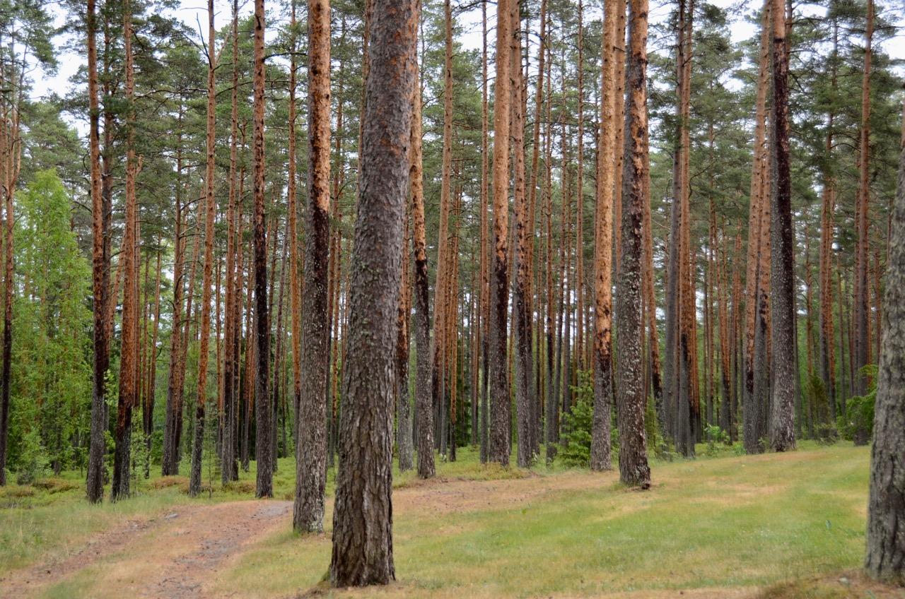 Pori Villa Alvar Alto Wald
