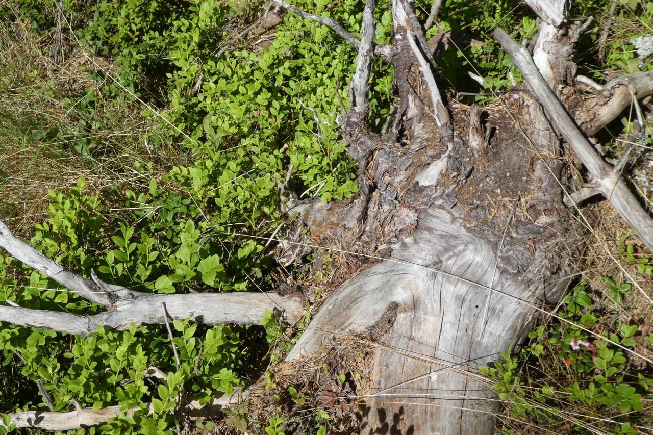 Langskär Wald