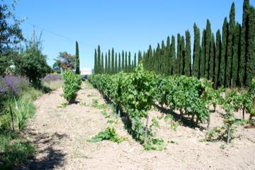De Bandol wijngaard La Malisonne