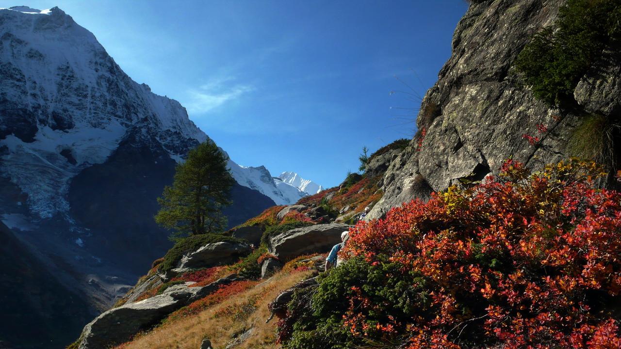 schneeweisses Bietschhorn, noch grüne Lärche, bunte Zwergsträucher ....
