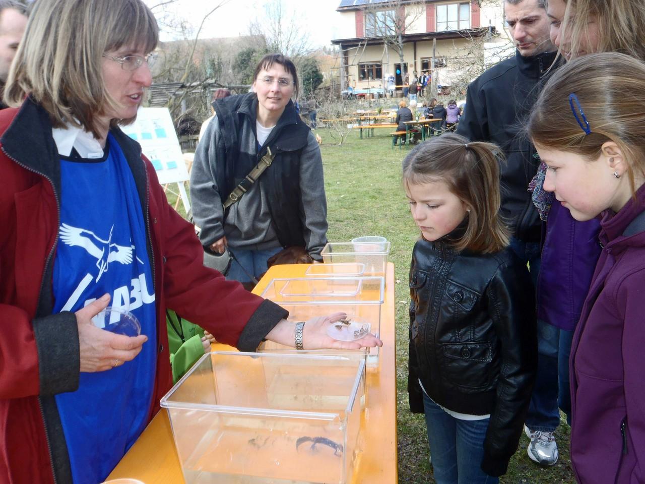 Libellenlarven und nur die Libellenhaut (Exhuvien) schauen sich Kinder und Erwachsene interessiert an