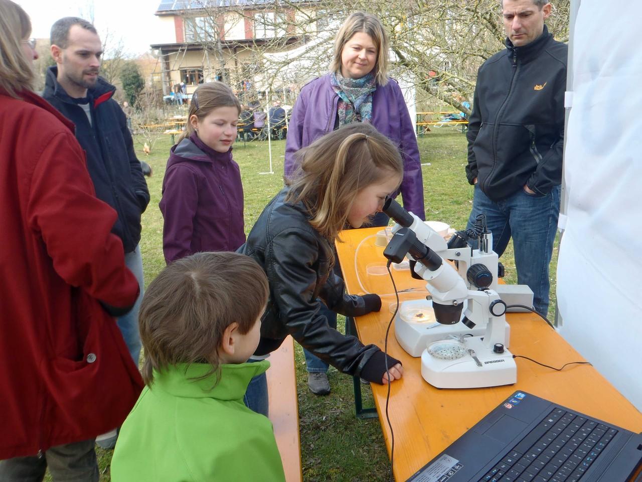 im Mikroskop kann man Wasserschneckeneier und Froscheier vergleichen