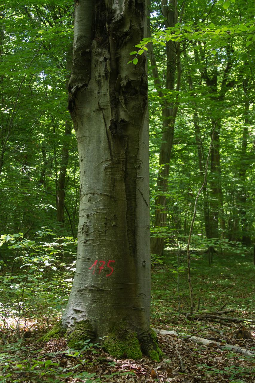 Bäume für die Ewigkeit