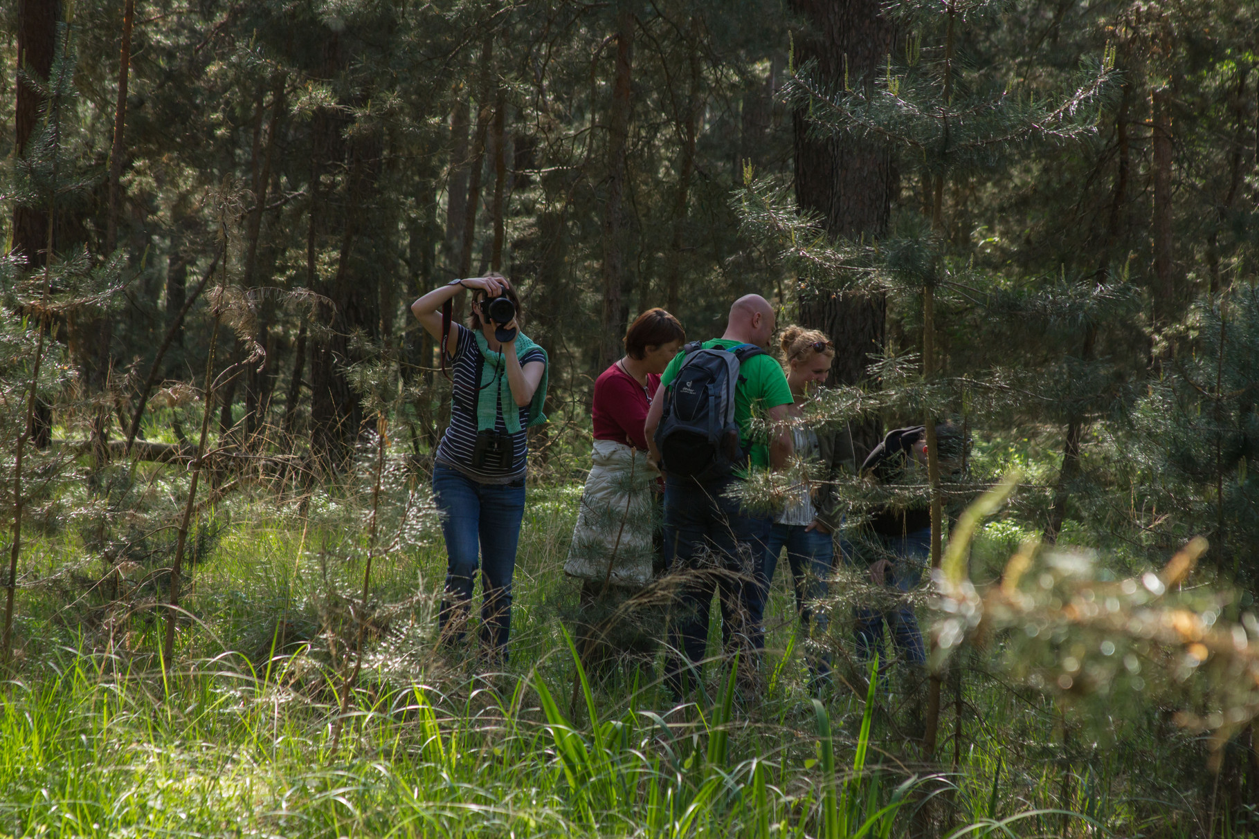 Neustadter Ordenswald