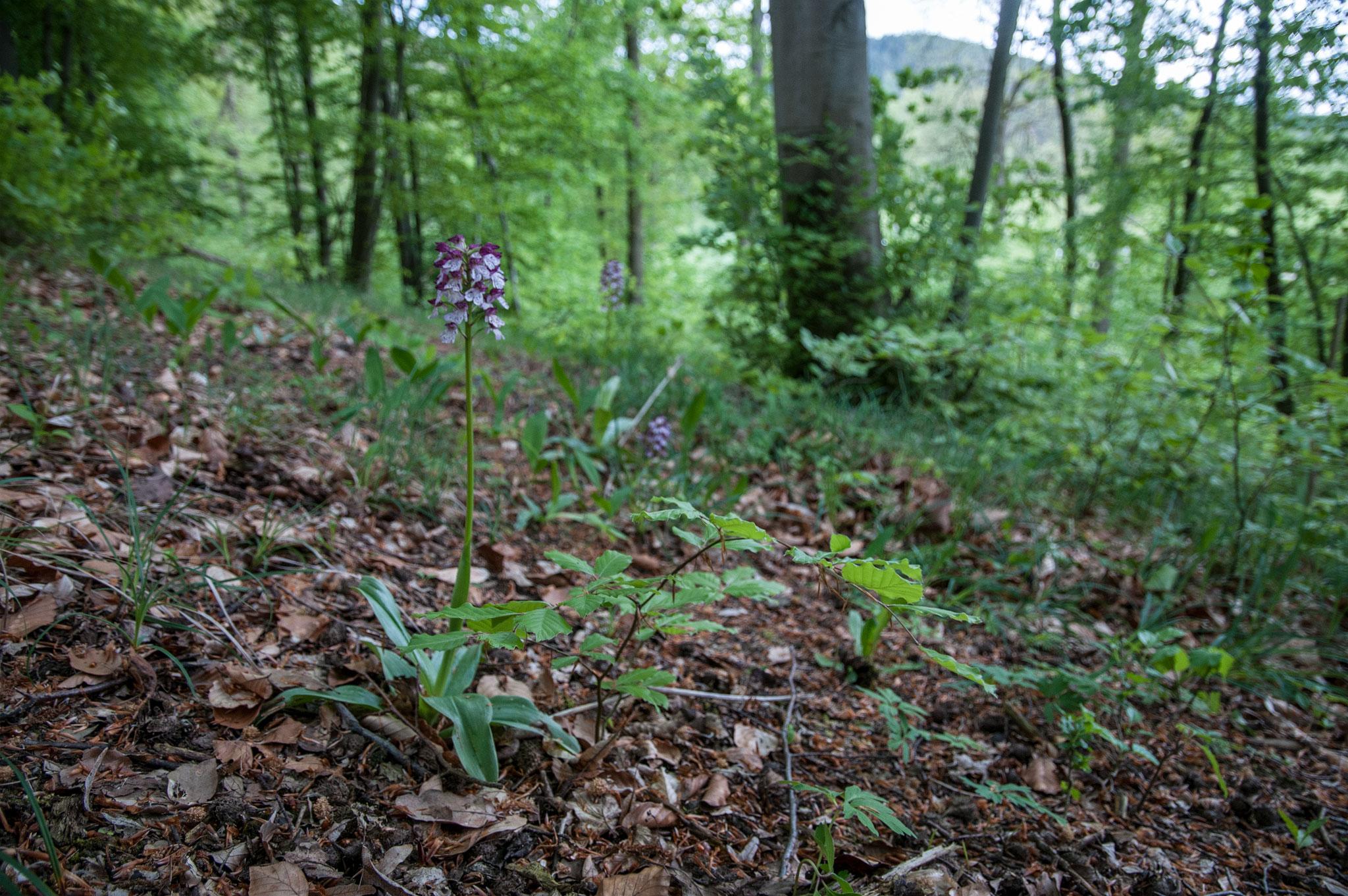 Biotop Wald