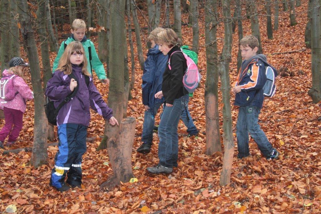 """hier kann man anhand der Spuren an den Bäumen """"Malbäume"""" die Höhe der Wildschweine erkennen"""