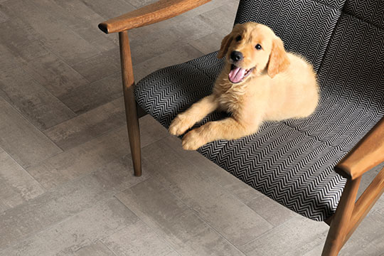 A tile floor is a clean floor when you have furry friends.