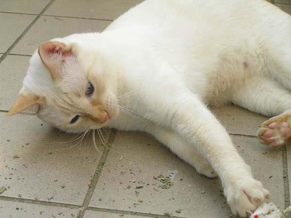 Ich liebe das! Catnip-Mäuse - einfach herrlich!!!