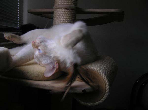 Dabei noch akrobatische Verrenkungen, das ist klasse!