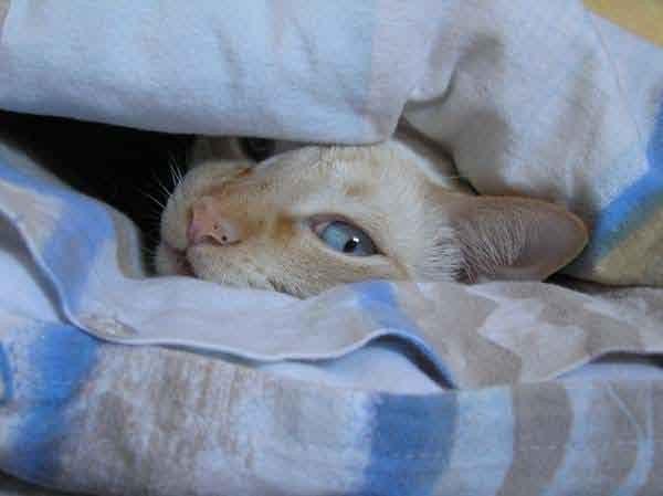 Ich sehe doch wirklich genauso aus wie die Bettdecke, oder?