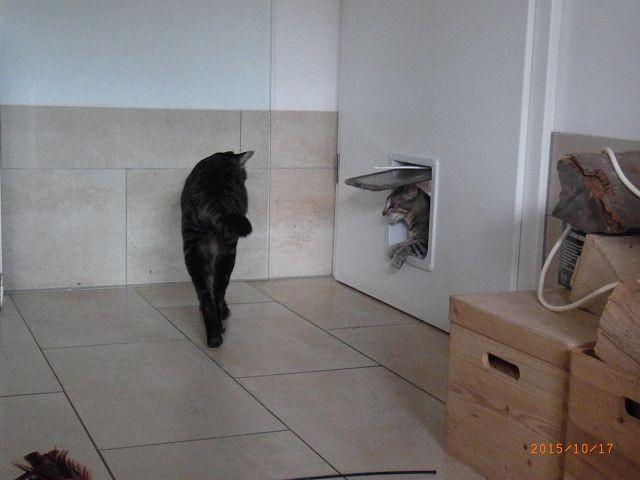 Ach, der war im Flur und nun kommt er gerade wieder ins Wohnzimmer!