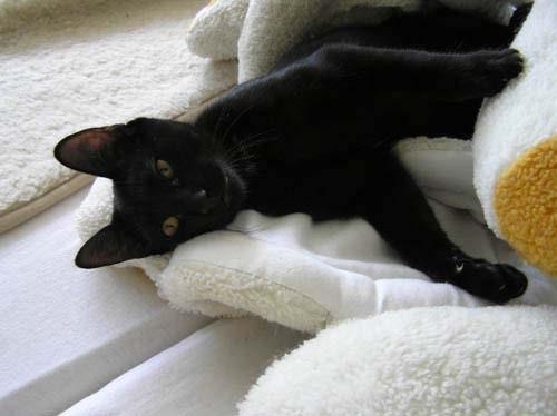 Was für Kampf - ich bin eindeutig der Lodderkatzen-Killer!