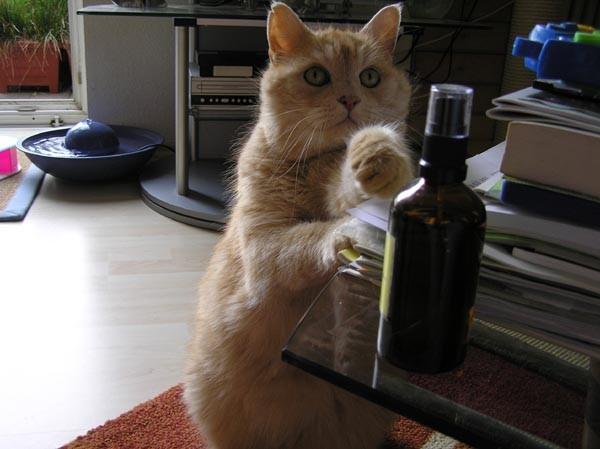 Bitte, ein Käserolli, ein Einziges!!!!