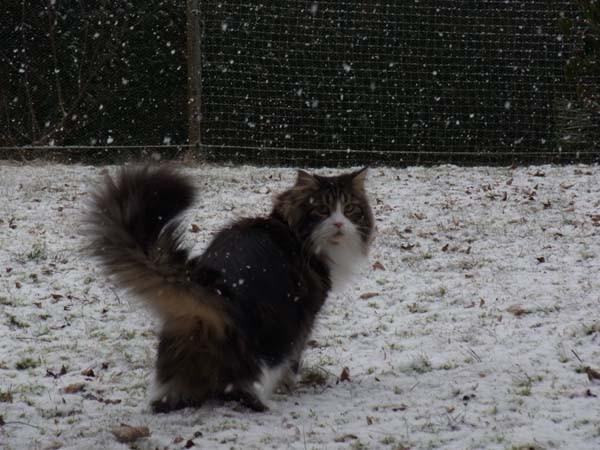 Super Wind, klasse Schnee und schöner Grasmatsch, genau nach meinem Geschmack!