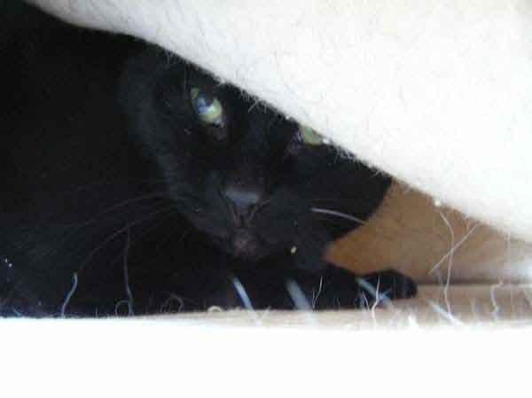 Guckt auch keiner von den blöden anderen Katzen?