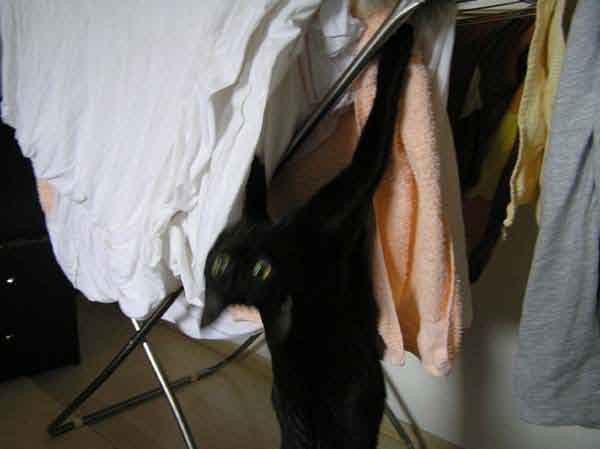 Bergsteigen ist ein Scheiß gegen diesen Wäscheständer!